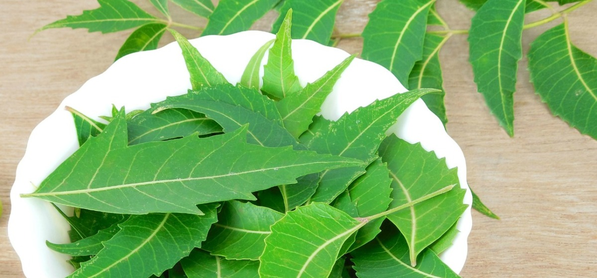 The Benefits of Neem for your Skin